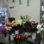 Kwiaciarnia Grudziądz - ANIMUS