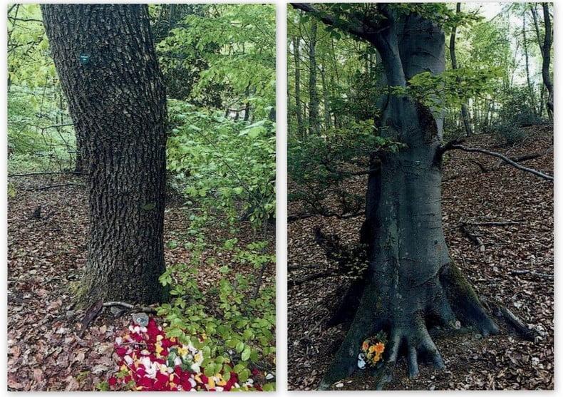 pogrzeb w lesie