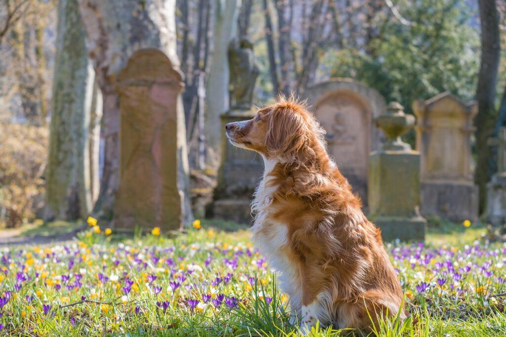 pies tęskni za swoim właścicielem